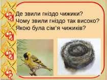 Де звили гніздо чижики? Чому звили гніздо так високо? Якою була сім'я чижиків?