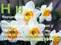 Н н Нарциси Нарциси тендітні, ласкаві нарциси, Сьогодні на святі в руках у Ла...