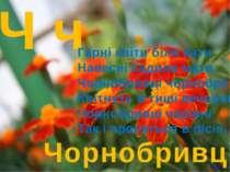 Ч ч Чорнобривці Гарні квіти біля хати Навесні садила мати. Чорнобривці чорноб...