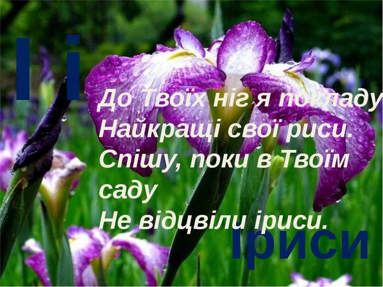 І і Іриси До Твоїх ніг я покладу Найкращі свої риси. Спішу, поки в Твоїм саду...