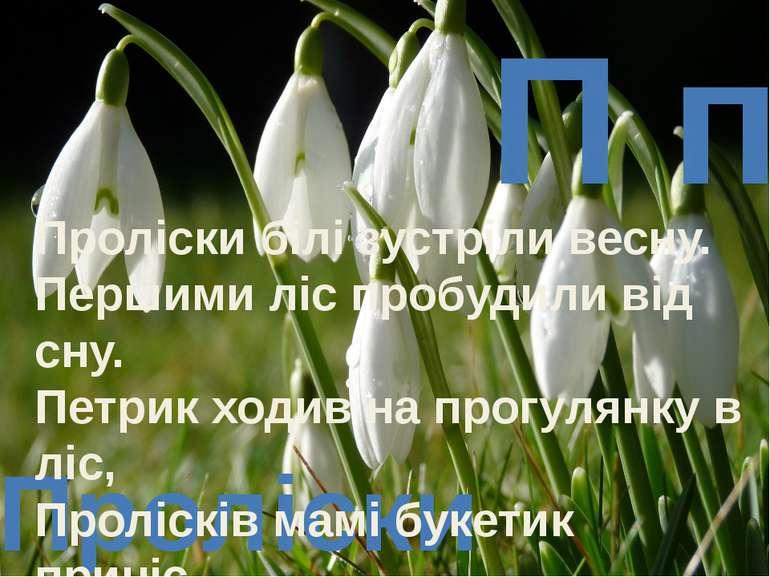 П п Проліски Проліски білі зустріли весну. Першими ліс пробудили від сну. Пет...
