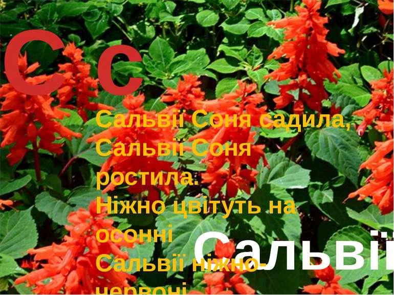С с Сальвії Сальвії Соня садила, Сальвії Соня ростила. Ніжно цвітуть на осонн...
