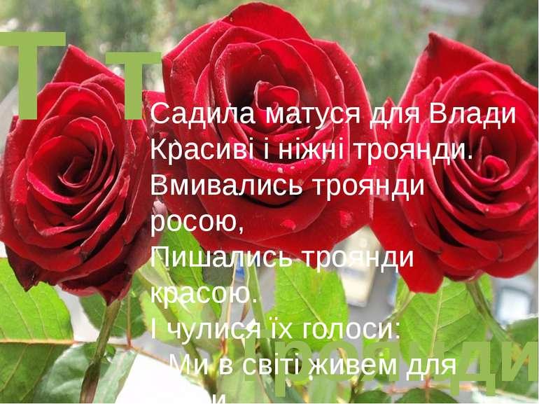Т т Троянди Садила матуся для Влади Красиві і ніжні троянди. Вмивались троянд...
