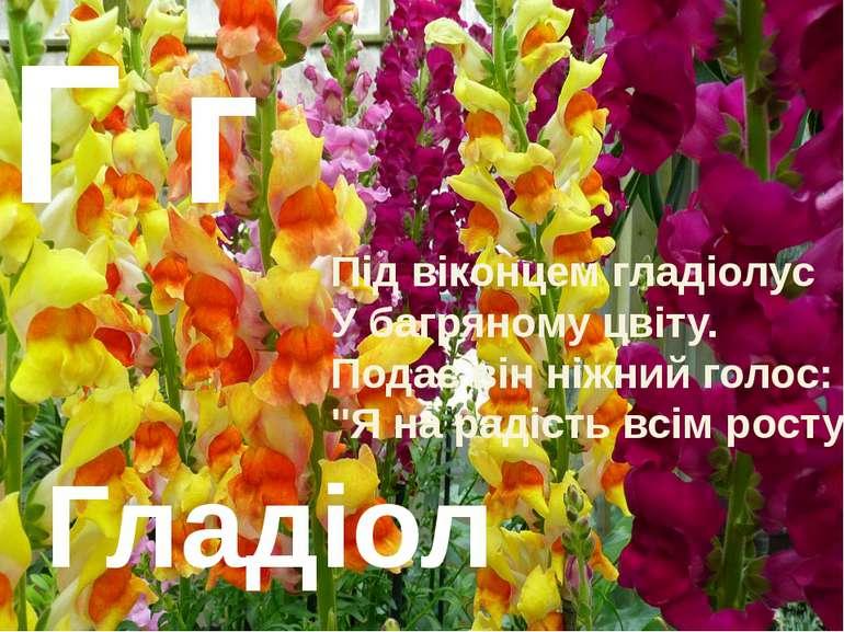 Гладіолус Г г Під віконцем гладіолус У багряному цвіту. Подає він ніжний голо...