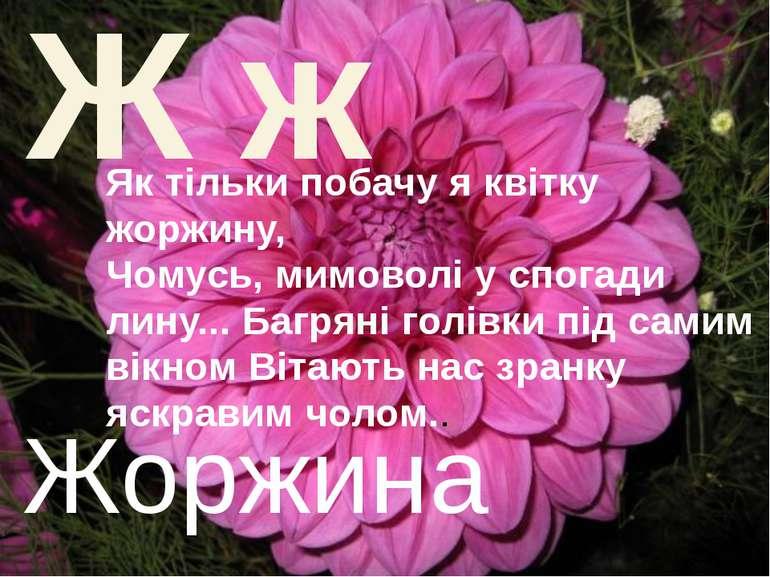 Ж ж Жоржина Як тільки побачу я квітку жоржину, Чомусь, мимоволі у спогади лин...