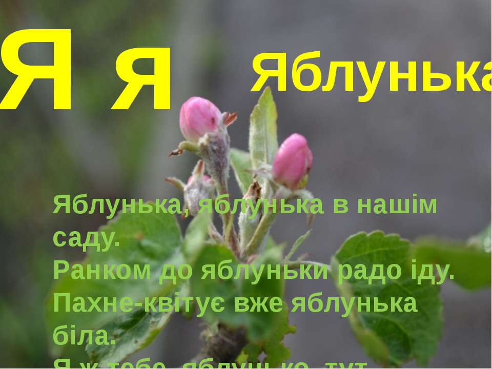Я я Яблунька Яблунька, яблунька в нашім саду. Ранком до яблуньки радо іду. Па...