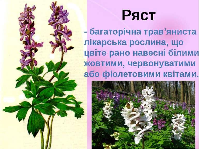 - багаторічна трав'яниста лікарська рослина, що цвіте рано навесні білими, жо...