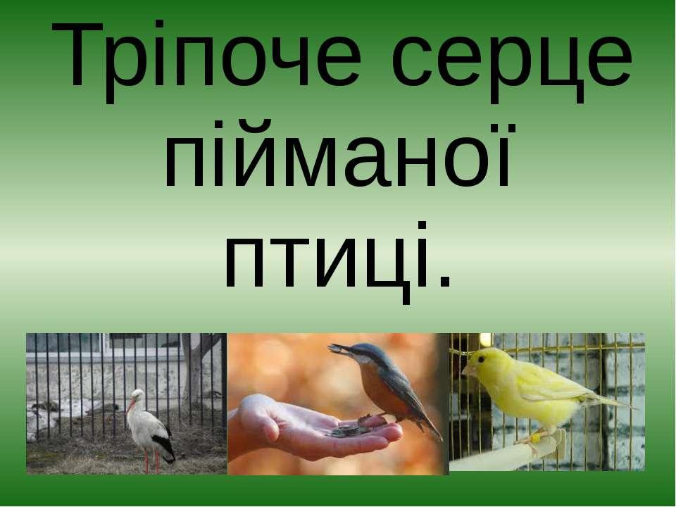 Тріпоче серце пійманої птиці.