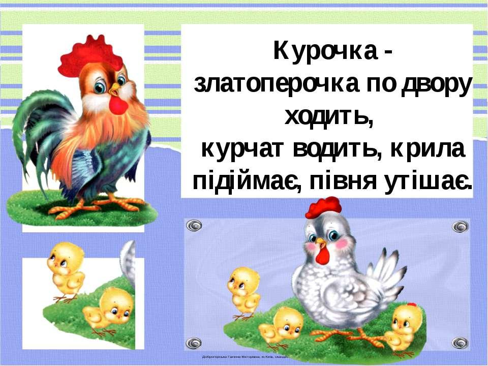 Курочка - златоперочка по двору ходить, курчат водить, крила підіймає, півня ...