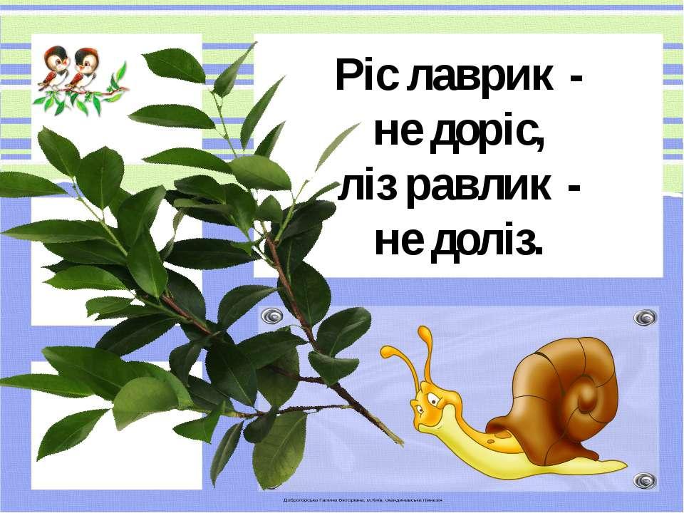 Ріс лаврик - не доріс, ліз равлик - не доліз.