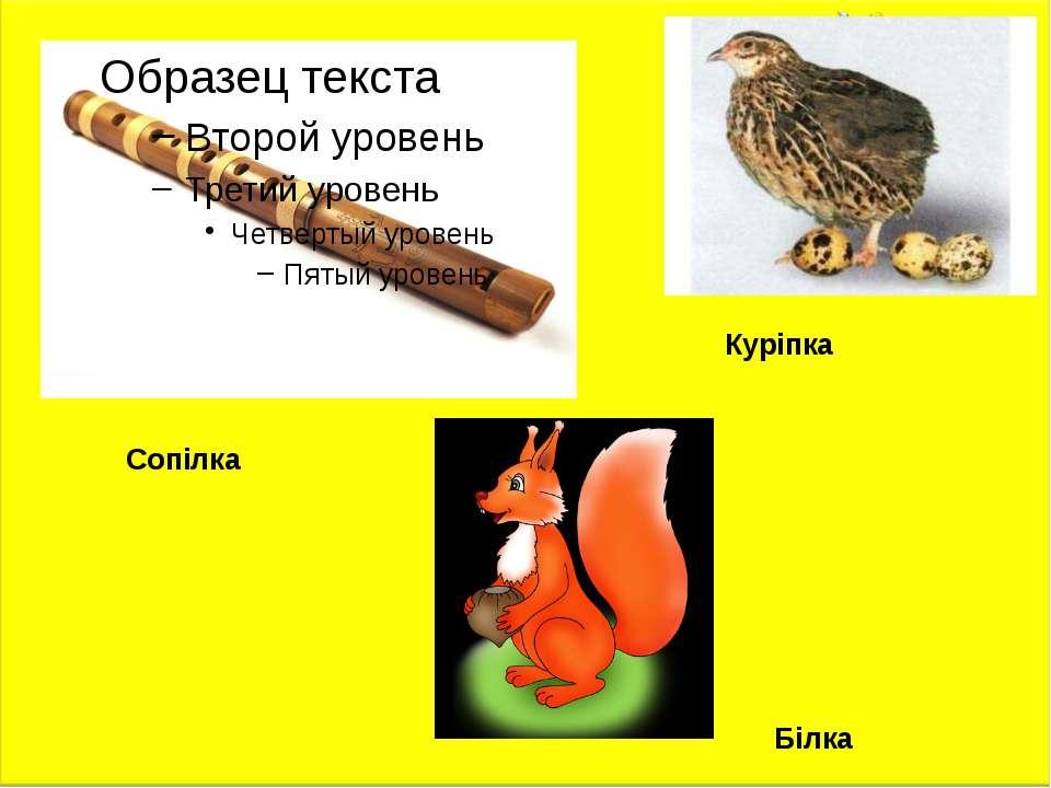 Куріпка Білка Сопілка