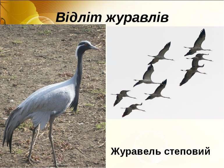 Відліт журавлів Журавель степовий