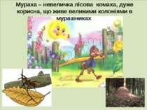 . Мураха – невеличка лісова комаха, дуже корисна, що живе великими колоніями ...