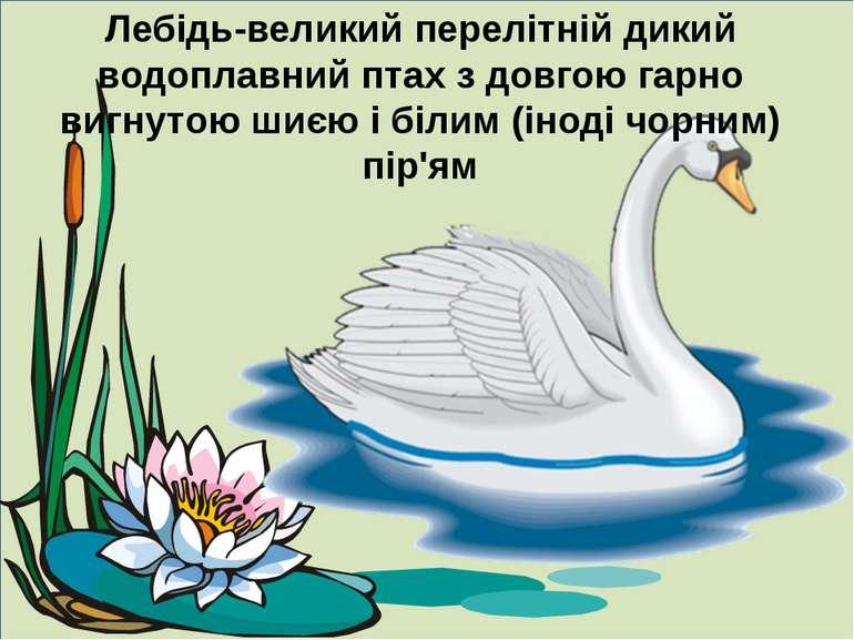 Лебідь-великий перелітній дикий водоплавний птах з довгою гарно вигнутою шиєю...
