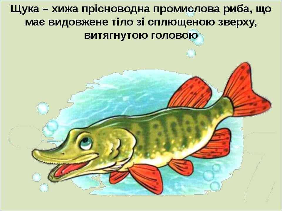 Щука – хижа прісноводна промислова риба, що має видовжене тіло зі сплющеною з...