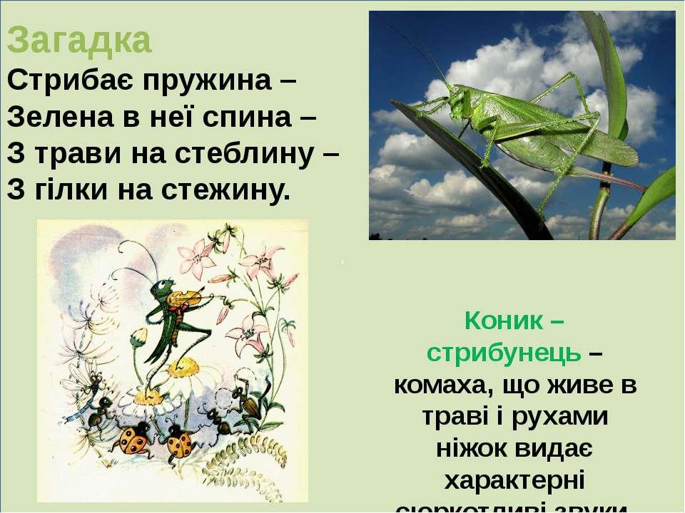 . Загадка Стрибає пружина – Зелена в неї спина – З трави на стеблину – З гілк...