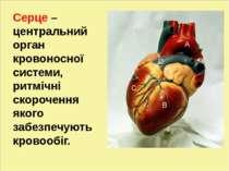 л Серце – центральний орган кровоносної системи, ритмічні скорочення якого за...
