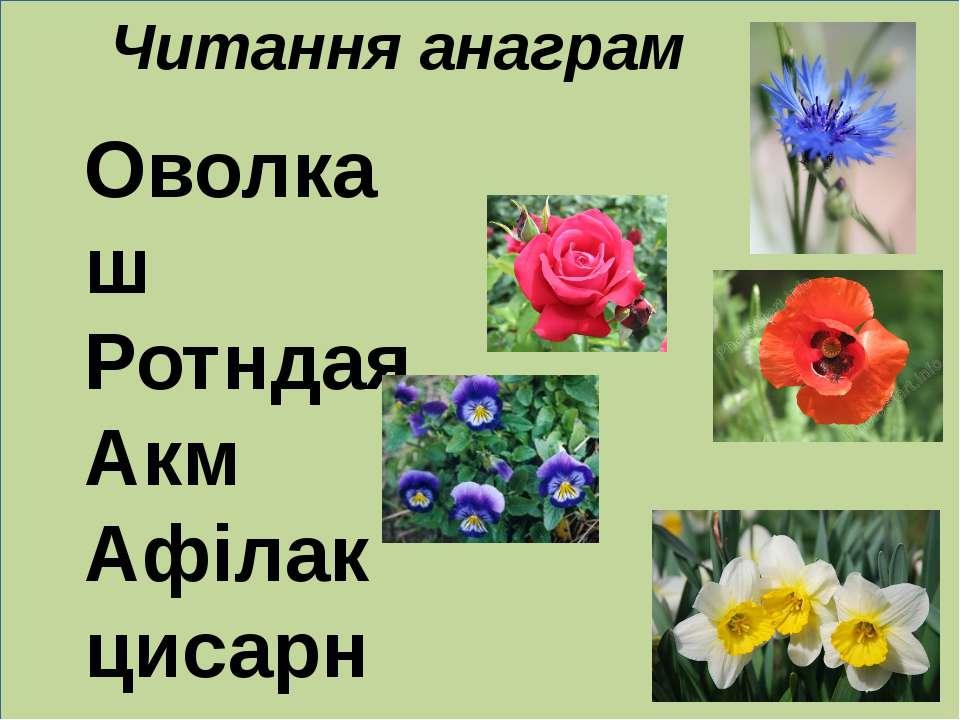 Читання анаграм Оволкаш Ротндая Акм Афілак цисарн