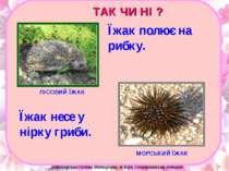 ЛІСОВИЙ ЇЖАК МОРСЬКИЙ ЇЖАК Їжак несе у нірку гриби. Їжак полює на рибку. ТАК ...