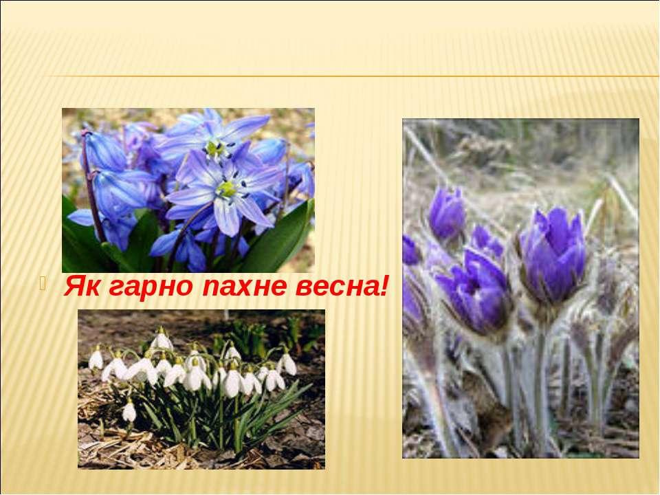 Як гарно пахне весна!