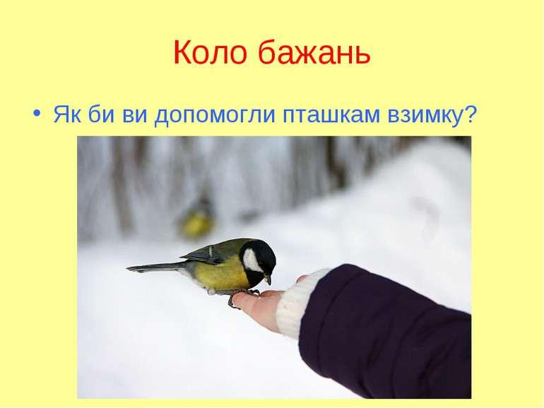 Коло бажань Як би ви допомогли пташкам взимку?