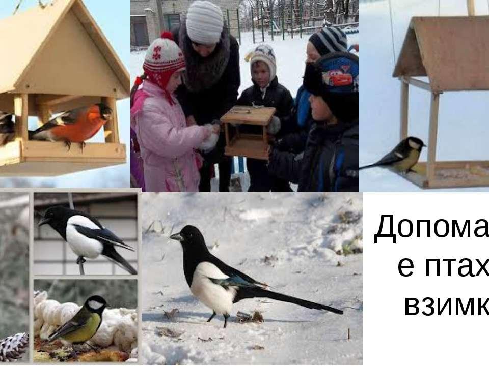 Допомагайте птахам взимку!