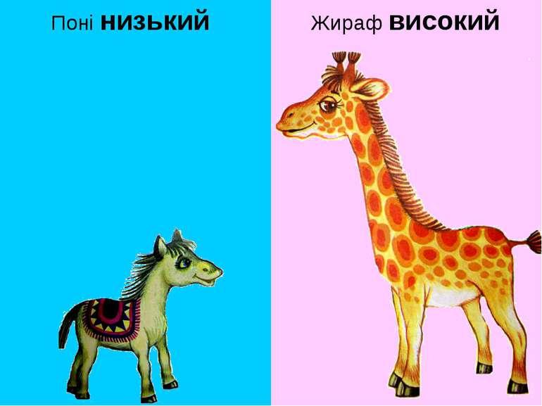 Поні низький Жираф високий
