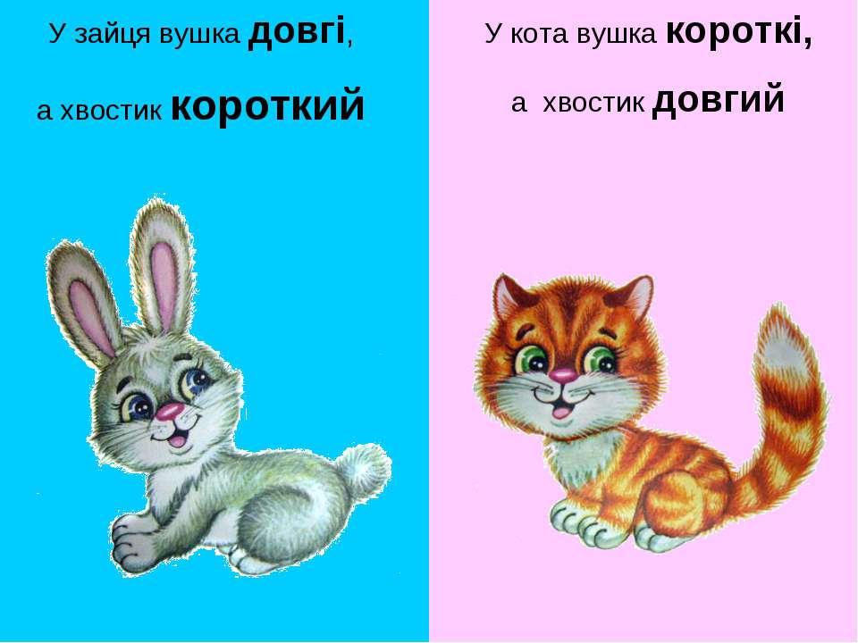 У зайця вушка довгі, а хвостик короткий У кота вушка короткі, а хвостик довгий