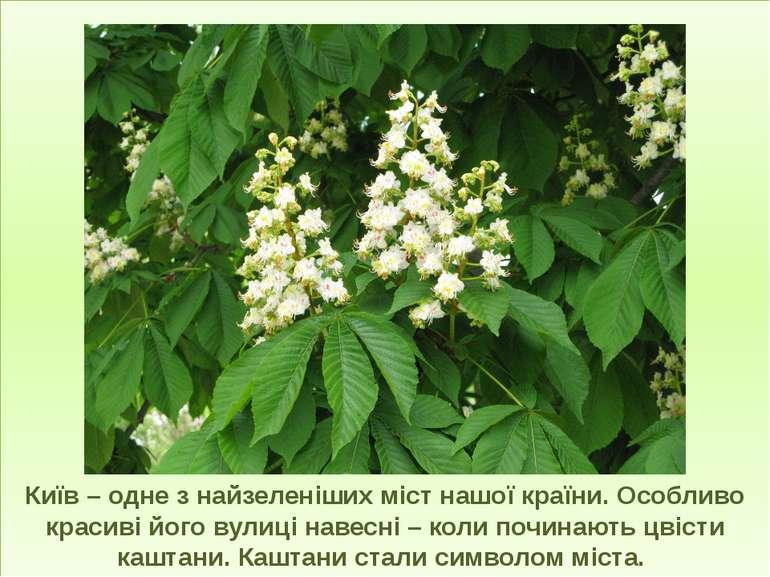 Київ – одне з найзеленіших міст нашої країни. Особливо красиві його вулиці на...
