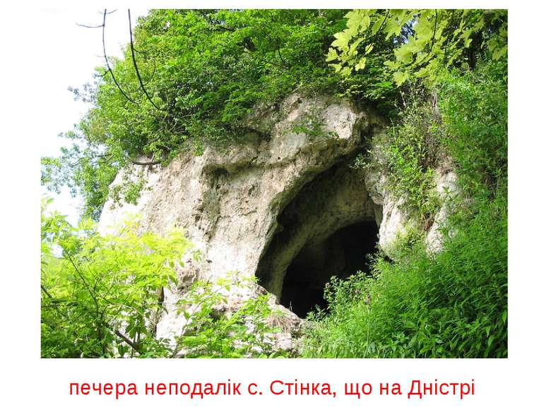 печера неподалік с. Стінка, що на Дністрі