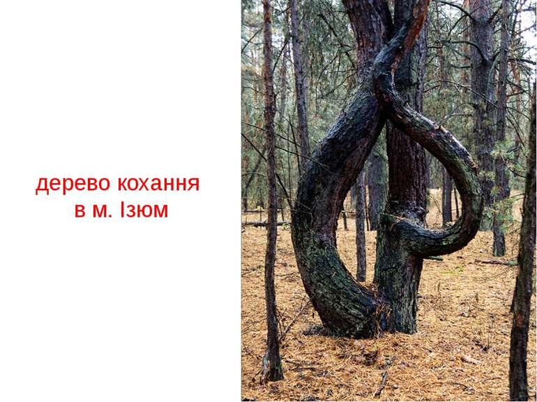 дерево кохання в м. Ізюм