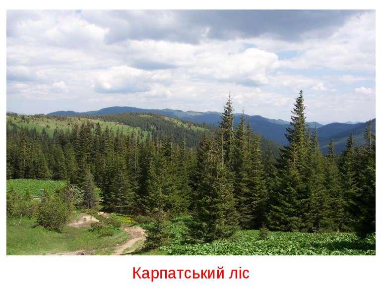 Карпатський ліс