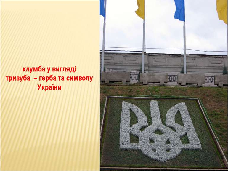 клумба у вигляді тризуба – герба та символу України