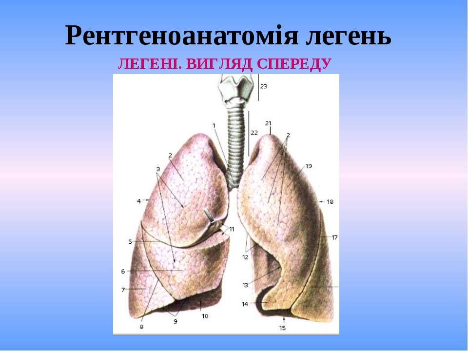 Рентгеноанатомія легень ЛЕГЕНІ. ВИГЛЯД СПЕРЕДУ