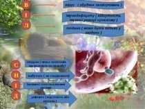 В І Л Н І Д С вірус ( збудник захворювань ) імунодефіциту ( відсутність іму...