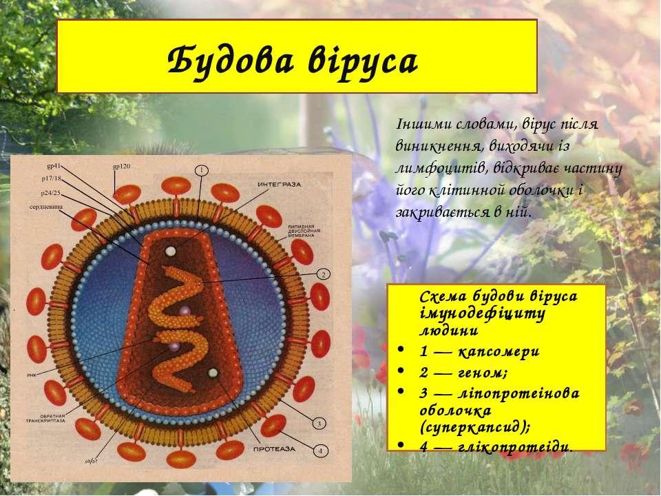Будова віруса Іншими словами, вірус після виникнення, виходячи із лимфоцитів,...