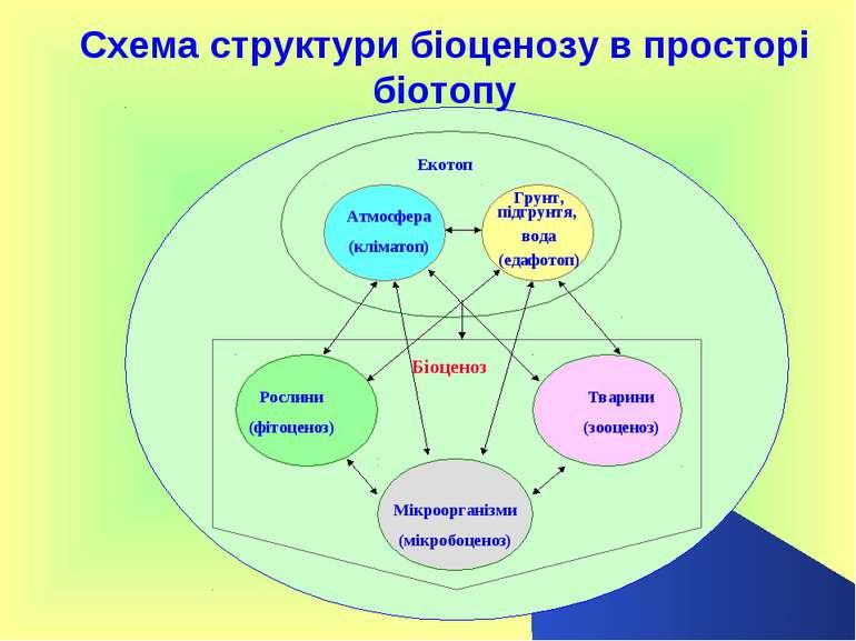 Схема структури біоценозу в просторі біотопу Атмосфера (кліматоп) Тварини (зо...