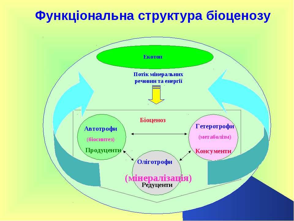 Функціональна структура біоценозу Гетеротрофи (метаболізм) Автотрофи (біосинт...
