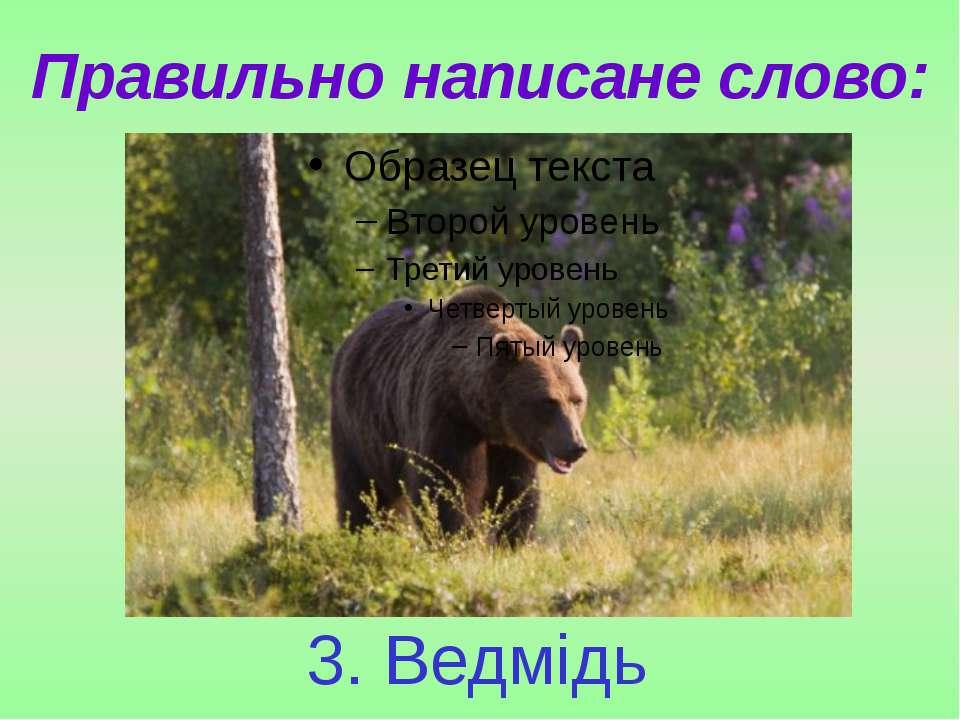 Правильно написане слово: 3. Ведмідь