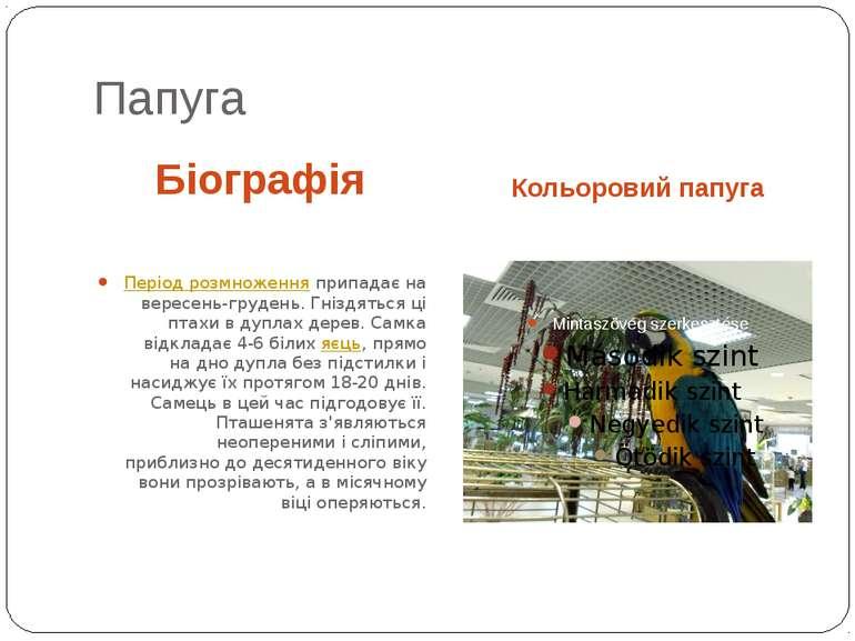 Папуга Біографія Кольоровий папуга Період розмноженняприпадає на вересень-гр...