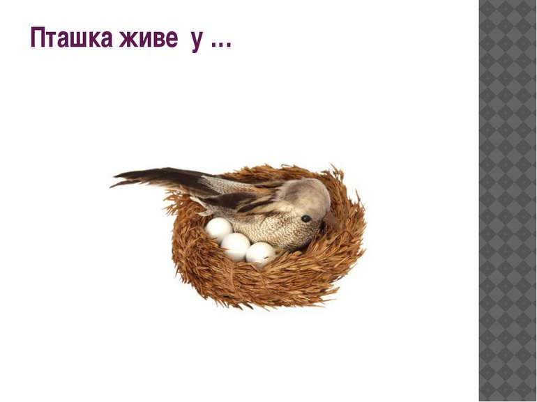 Пташка живе у …