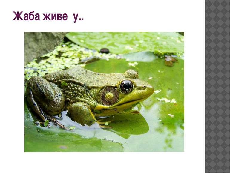 Жаба живе у..