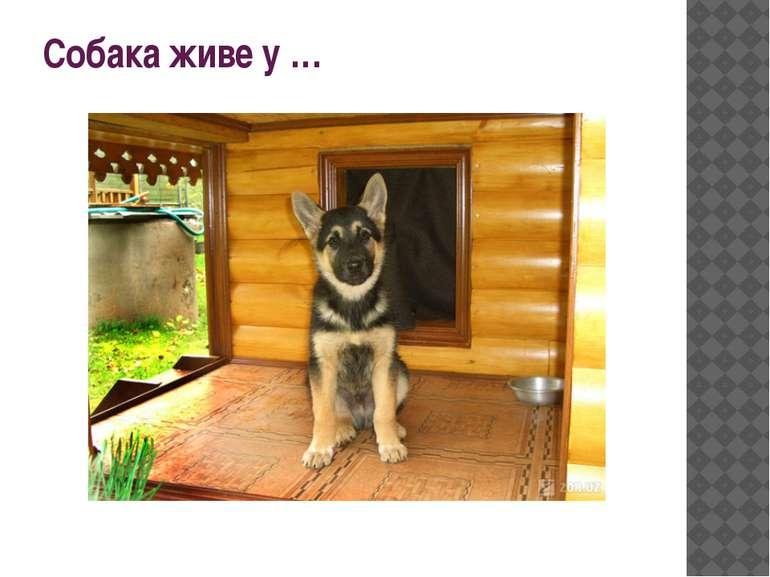 Собака живе у …