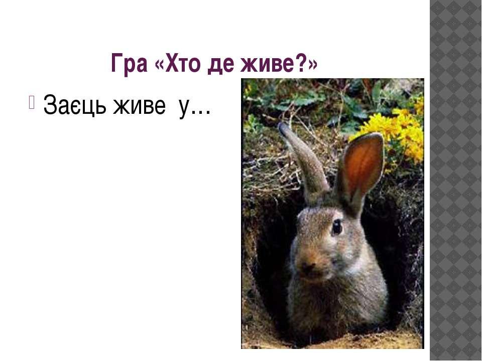 Гра «Хто де живе?» Заєць живе у…