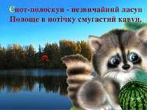 Єнот-полоскун - незвичайний ласун Полоще в потічку смугастий кавун. Є