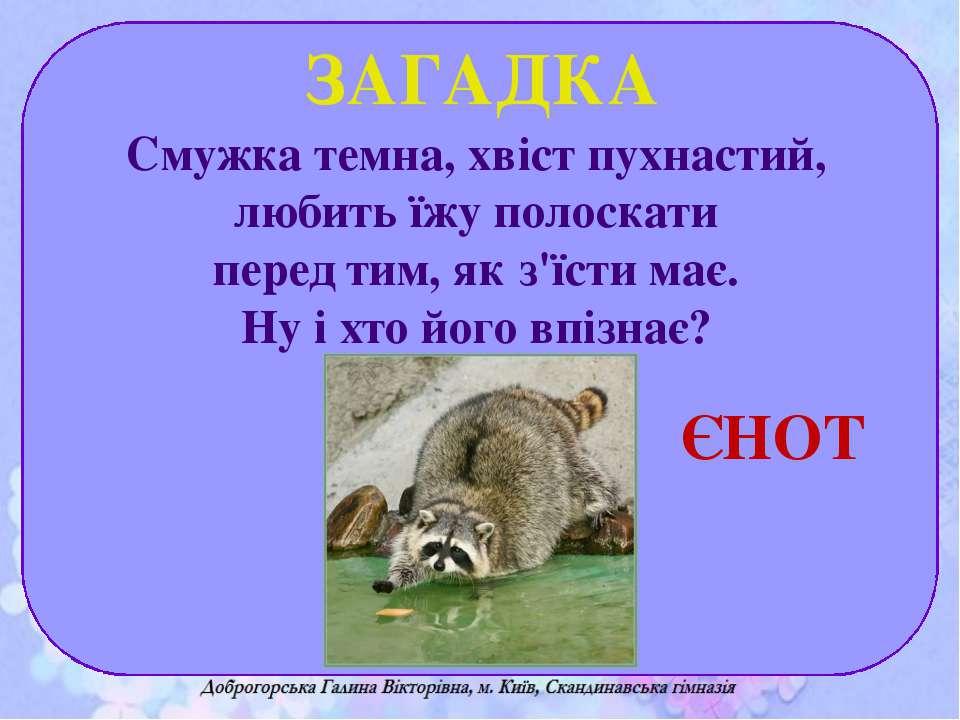 Смужка темна, хвіст пухнастий, любить їжу полоскати перед тим, як з'їсти має....