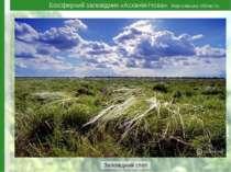 Біосферний заповідник «Асканія-Нова», Херсонська область Заповідний степ