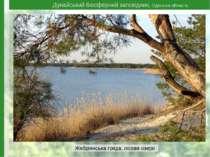 Дунайський біосферний заповідник, Одеська область Жебріянська гряда, лісове о...