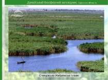 Дунайський біосферний заповідник, Одеська область Стенцівсько-Жебріянські плавні