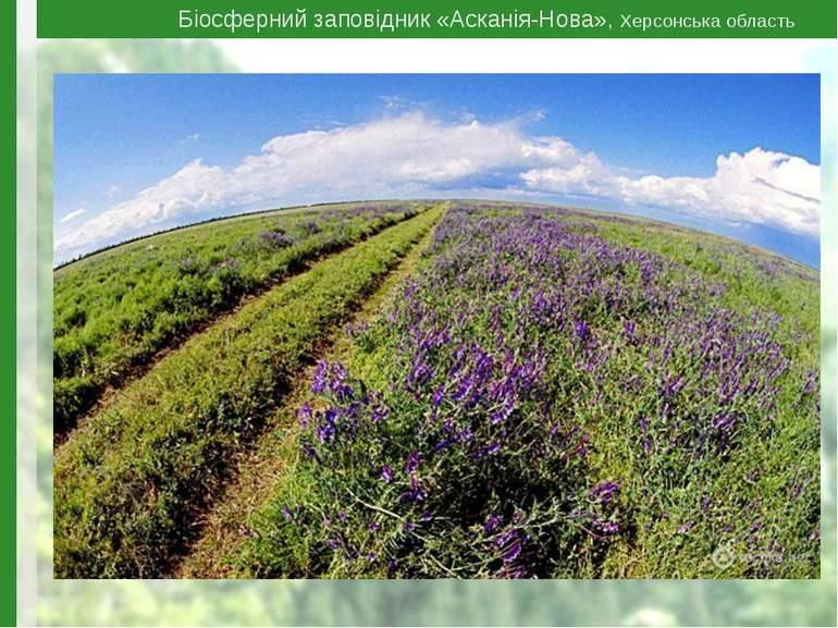 Біосферний заповідник «Асканія-Нова», Херсонська область